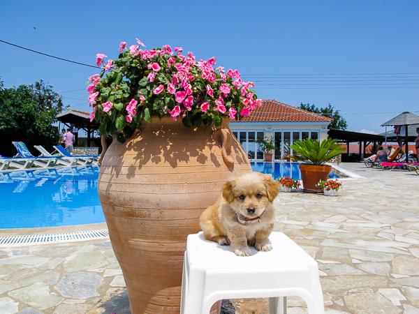 Corfu, Hotel Livadi Nafsika, exterior.jpg